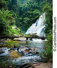 Tropical rain forest landscape with jungle plants, flowing water