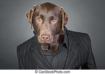Cool Looking Chocolate Labrador in Pinstripe Suit
