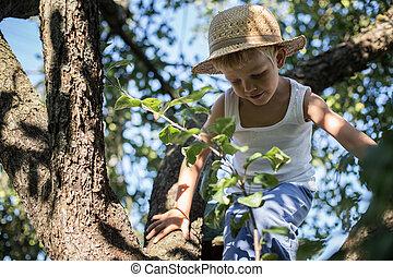 Little boy climbing a tree - Outdoor portrait: Little boy...