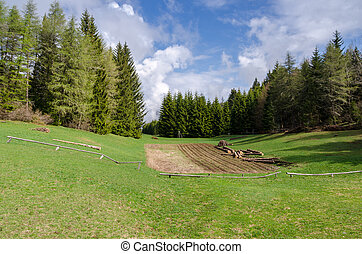 meadow in Trentino - Predaia on the lawn in Trentino Alto...
