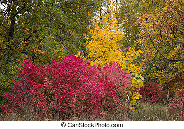 autumn trees with leaves of bright