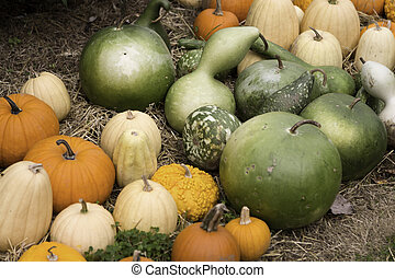 Pumpkins And Bushel Gourds - Ripe pumpkins and gourds ready...
