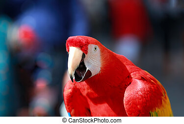 Parrot - Red Blue Macaw Speaking