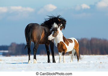 Two horses playing in the snow in wintertime.
