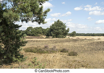 Landscape in National Park Hoge Veluwe in the Netherlands. -...