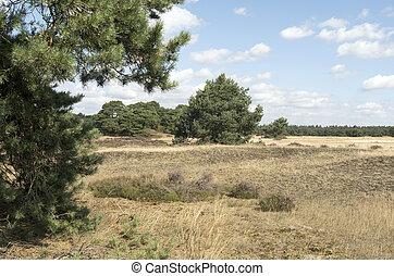 Landscape in National Park Hoge Veluwe in the Netherlands -...