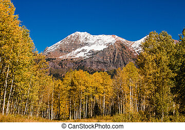 Fall Color in Crested Butte Colorado - Freshly fallen snow...