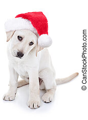 Christmas Santa Dog - Christmas Labrador puppy dog wearing...