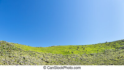 Green Hillside - Green hillside under a bright blue sky