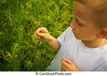 Child playing on meadow examining field flowers - Child...