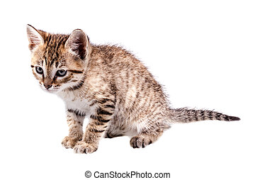 Cuteness - a lovely small kitten isolated over a pure white...