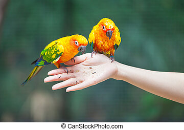 Feeding Colorful parrots sitting on human hand