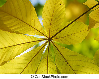 chestnut leaves in the forest