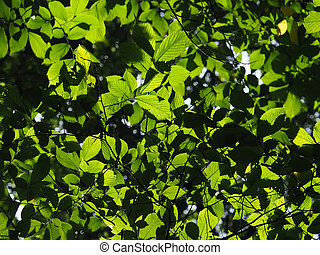 elm leaves in the forest