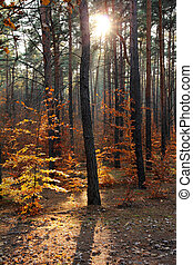 Autumnal forest and sun rays
