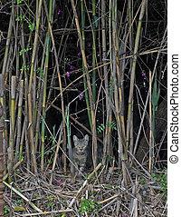 Feral Cat - Feral cat in wild bamboo