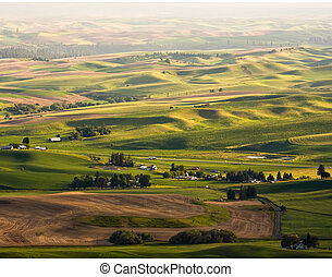 Palouse Wheat Fields - Horizontal Photo of green Palouse...