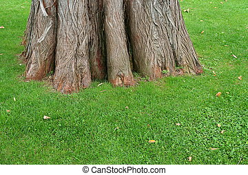 Big trunk of old tree on green grass