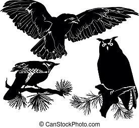 cuckoo owl eagle