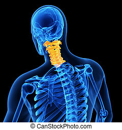 the cervical spine - medical 3d illustration of the cervical...