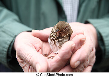 Recovering baby bird held by man - Rescued, stunned bird...