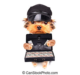 puppy holding case with money - cute little puppy holding...