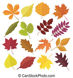 set of autumn leaves in flat style. isolated on white...