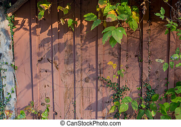 Grungy wooden textures over grown with vines and weeds