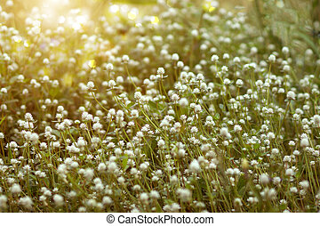 White flower grass in the nature