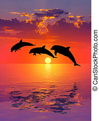 Beautiful dolphin - Sunset and dolphin,sea and sun,sky and...
