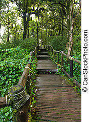 Pathway in the tropical rainforest
