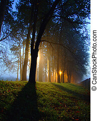 dawn at forest with fog