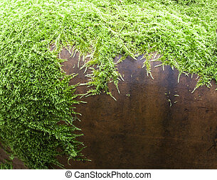 Moss background texture