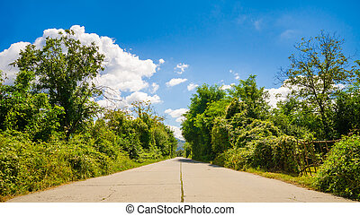 Rural industrial concrete cracked road with green bushes and trees on the side  on a sunny summer day with a blue cloudy sky