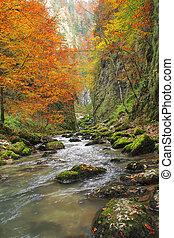 Galbena canyon autumn in Transylvania