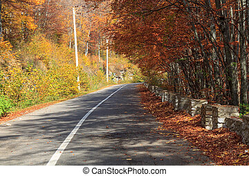 Autumn road in Transylvania,Romania