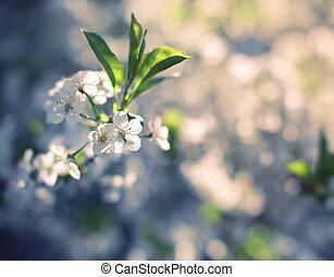 Floral spring blurred background, selective focus, vintage...