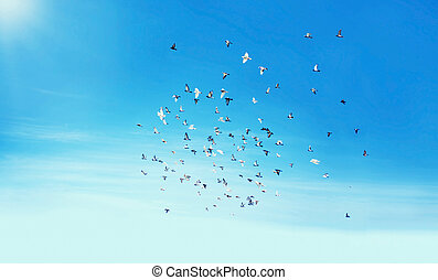 Heaven, migrating birds