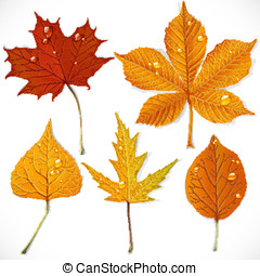 A set of yellow and red autumn leaves isolated on a white background