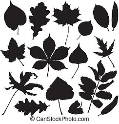 Silhouettes of leaves isolated on white background