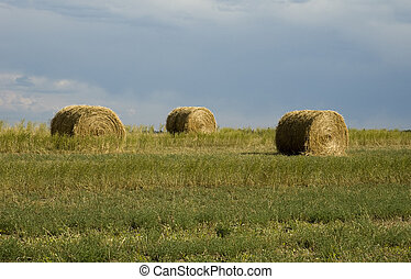 Hay on Wyoming Landscape