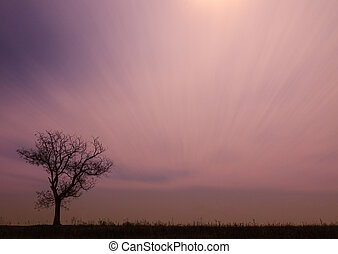 Lonely tree at sunset in the Hungary
