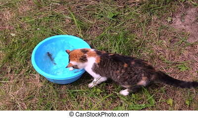 cat catch fish bowl - Nice cat catch crucian fish from...