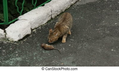 The cat sniffs dead rat.