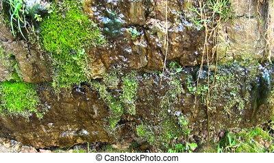Stones, moss, drops, water