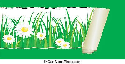 Green grass with daisy, vector patt