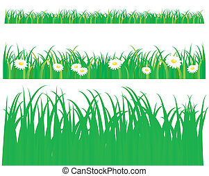 Green grass with daisy, pattern on white background