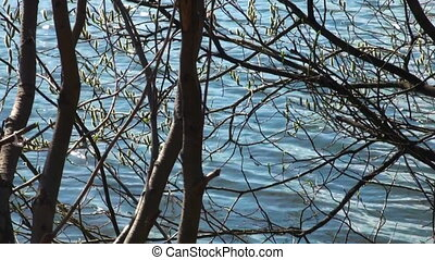 Branches without leaves, the water of the lake.