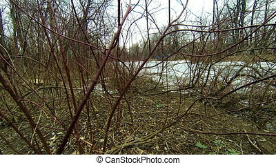 Bushes and branches without leaves