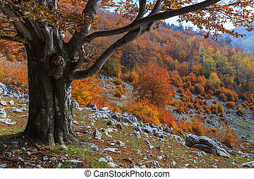 autumn landscape in The Mehedinti Mountains, Romania